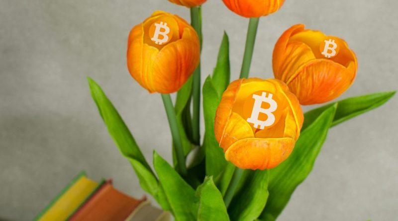 bitcoin tulip)